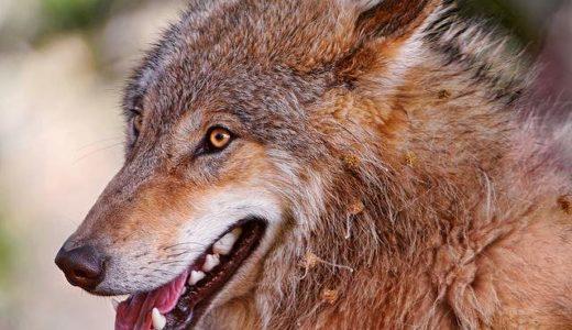 人狼番組はフジテレビの方がTBSよりもニコ動よりも面白い(ステマじゃないよ)