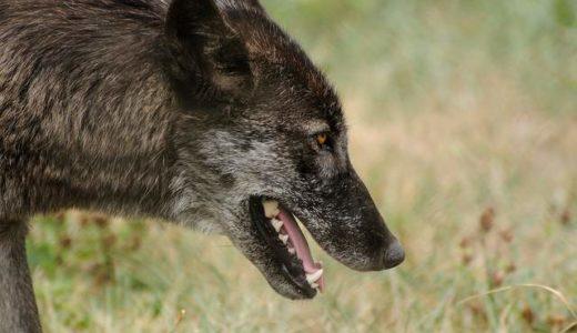 人狼アプリ「汝人狼也」のネット対戦が面白すぎて生活に支障をきたす